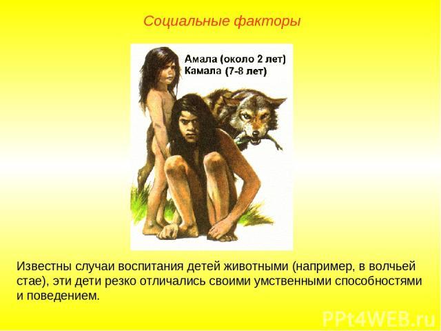 Известны случаи воспитания детей животными (например, в волчьей стае), эти дети резко отличались своими умственными способностями и поведением. Социальные факторы
