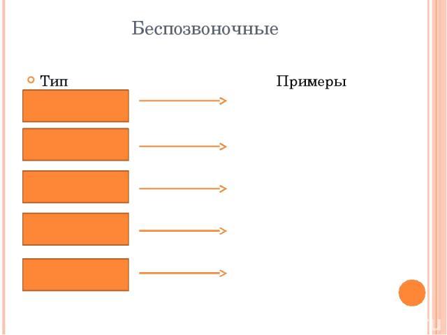 Беспозвоночные Тип Примеры
