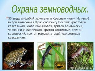 33 вида амфибий занесены в Красную книгу. Из них 8 видов занесены в Красную книг