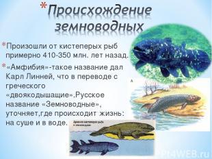 Произошли от кистеперых рыб примерно 410-350 млн. лет назад. «Амфибия»-такое наз