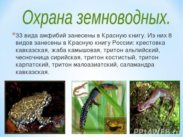 33 вида амфибий занесены в Красную книгу. Из них 8 видов занесены в Красную книгу России: крестовка кавказская, жаба камышовая, тритон альпийский, чесночница сирийская, тритон костистый, тритон карпатский, тритон малоазиатский, саламандра кавказская.