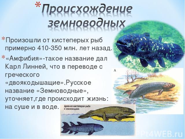 Произошли от кистеперых рыб примерно 410-350 млн. лет назад. «Амфибия»-такое название дал Карл Линней, что в переводе с греческого «двоякодышащие».Русское название «Земноводные», уточняет,где происходит жизнь: на суше и в воде.