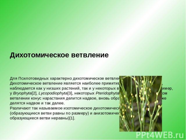 Дихотомическое ветвление ДляПсилотовидныххарактерно дихотомическое ветвление Дихотомическое ветвление является наиболее примитивным типом ветвления, наблюдается как у низших растений, так и у некоторых высших растений (например, уBryophyta[2],Ly…