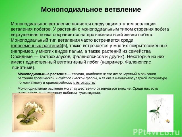Моноподиальное ветвление Моноподиальное ветвление является следующим этапом эволюции ветвления побегов. У растений с моноподиальным типом строения побега верхушечная почка сохраняется на протяжении всей жизни побега. Моноподиальный тип ветвления час…