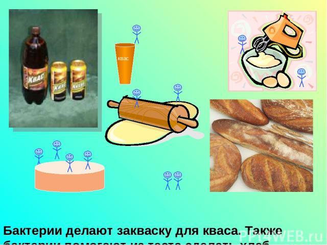 Бактерии делают закваску для кваса. Также бактерии помогают из теста сделать хлеб. квас