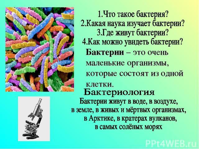 Бактерии – это очень маленькие организмы, которые состоят из одной клетки.