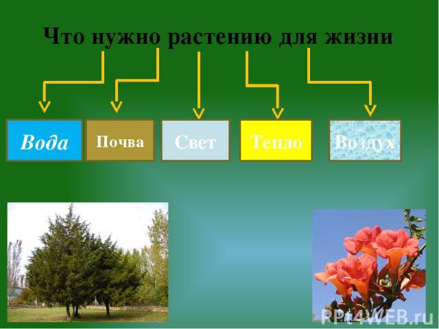 Что нужно растению для жизни Почва Тепло Вода Свет Воздух