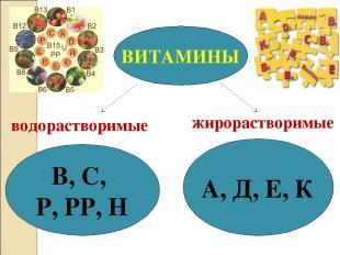 ВИТАМИНЫ В, С, Р, РР, Н А, Д, Е, К водорастворимые жирорастворимые