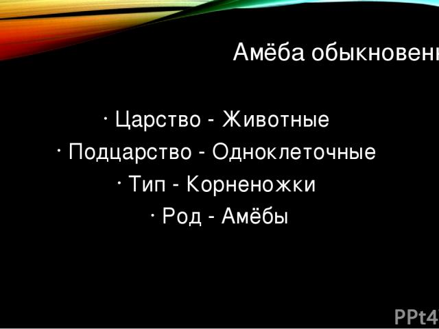 Амёба обыкновенная Царство - Животные Подцарство - Одноклеточные Тип - Корненожки Род - Амёбы