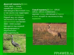 Даурский журавль[1] (лат.Grus vipio)— птица семейства журавлей, обитающая в Во