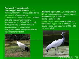 Японский (уссурийский, маньчжурский) журавль[1] (лат.Grus japonensis)— птица с