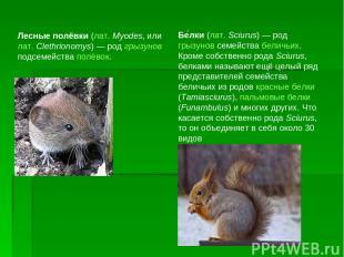 Лесные полёвки (лат.Myodes, или лат.Clethrionomys) — род грызунов подсемейства