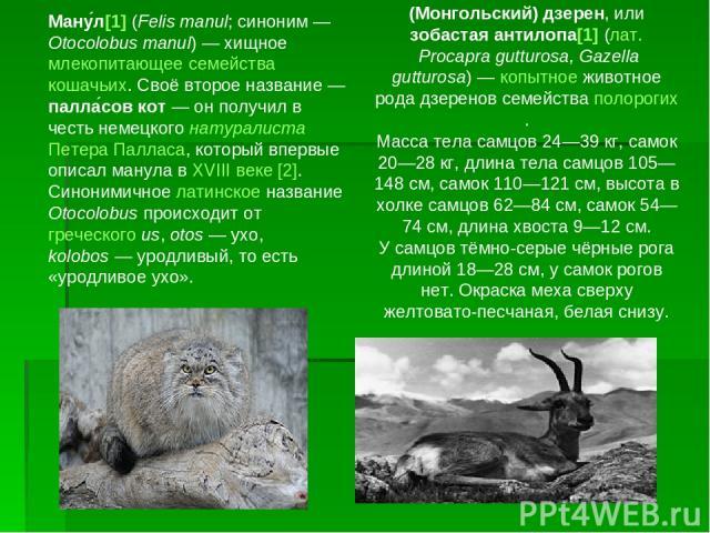Ману л[1] (Felis manul; синоним— Otocolobus manul)— хищное млекопитающее семейства кошачьих. Своё второе название— палла сов кот— он получил в честь немецкого натуралиста Петера Палласа, который впервые описал манула в XVIII веке [2]. Синонимичн…