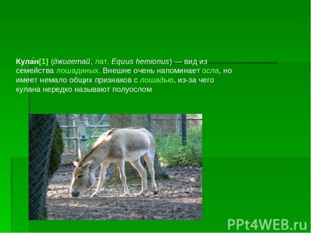 Кула н[1] (джигетай, лат.Equus hemionus)— вид из семейства лошадиных. Внешне очень напоминает осла, но имеет немало общих признаков с лошадью, из-за чего кулана нередко называют полуослом