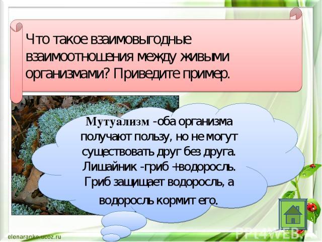 Что такое взаимовыгодные взаимоотношения между живыми организмами? Приведите пример. Мутуализм -оба организма получают пользу, но не могут существовать друг без друга. Лишайник -гриб +водоросль. Гриб защищает водоросль, а водоросль кормит его.