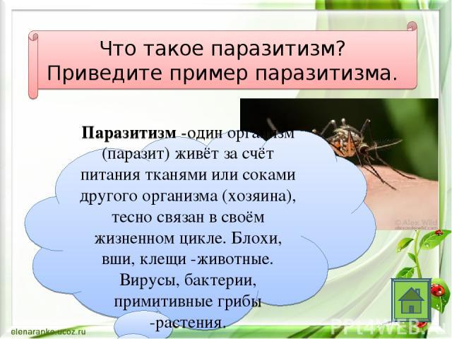 Что такое паразитизм? Приведите пример паразитизма. Паразитизм -один организм (паразит) живёт за счёт питания тканями или соками другого организма (хозяина), тесно связан в своём жизненном цикле. Блохи, вши, клещи -животные. Вирусы, бактерии, примит…