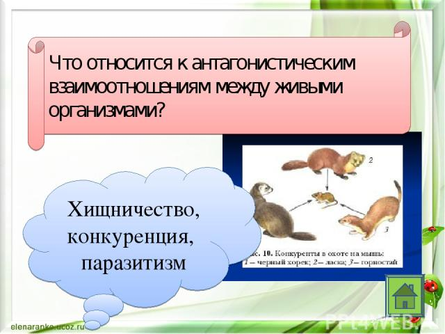 Что относится к антагонистическим взаимоотношениям между живыми организмами? Хищничество, конкуренция, паразитизм