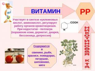 ВИТАМИН PP Участвует в синтезе нуклеиновых кислот, аминокислот, регулирует работ