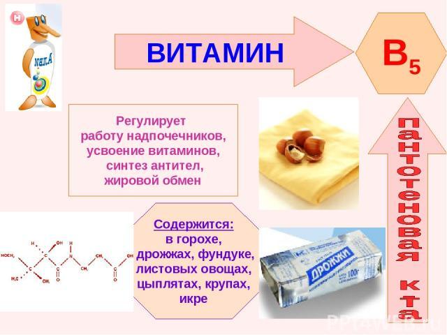 ВИТАМИН B5 Регулирует работу надпочечников, усвоение витаминов, синтез антител, жировой обмен Содержится: в горохе, дрожжах, фундуке, листовых овощах, цыплятах, крупах, икре