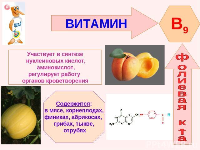 ВИТАМИН B9 Участвует в синтезе нуклеиновых кислот, аминокислот, регулирует работу органов кроветворения Содержится: в мясе, корнеплодах, финиках, абрикосах, грибах, тыкве, отрубях