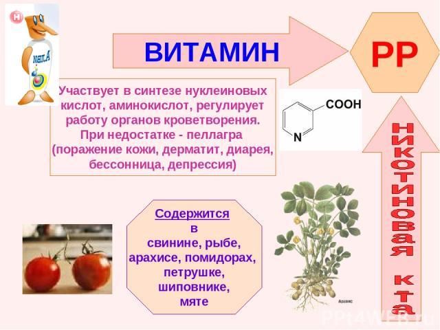 ВИТАМИН PP Участвует в синтезе нуклеиновых кислот, аминокислот, регулирует работу органов кроветворения. При недостатке - пеллагра (поражение кожи, дерматит, диарея, бессонница, депрессия) Содержится в свинине, рыбе, арахисе, помидорах, петрушке, ши…