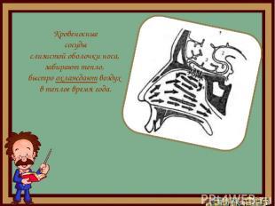 Кровеносные сосуды слизистой оболочки носа, забирают тепло, быстро охлаждают воз