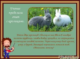 Взяли двух кроликов. Одному из них ввели в носовую полость трубочки, чтобы возду