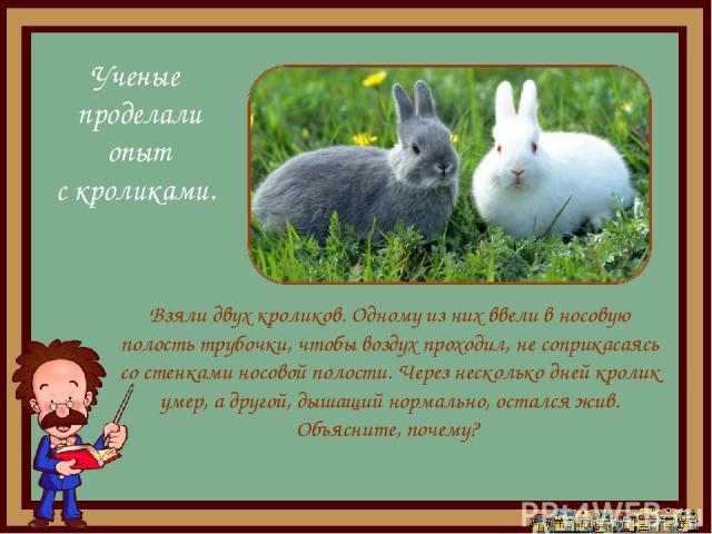 Взяли двух кроликов. Одному из них ввели в носовую полость трубочки, чтобы воздух проходил, не соприкасаясь со стенками носовой полости. Через несколько дней кролик умер, а другой, дышащий нормально, остался жив. Объясните, почему? Ученые проделали …