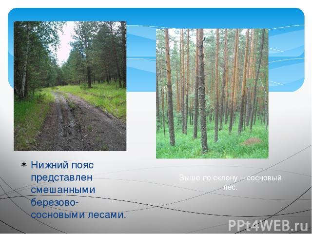 Нижний пояс представлен смешанными березово-сосновыми лесами. Выше по склону – сосновый лес.