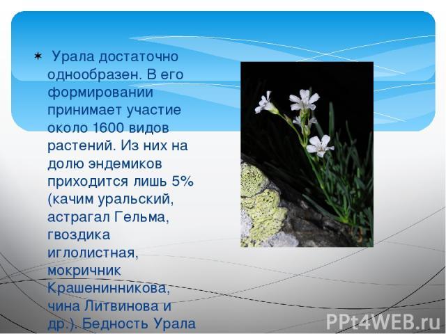 Урала достаточно однообразен. В его формировании принимает участие около 1600 видов растений. Из них на долю эндемиков приходится лишь 5% (качим уральский, астрагал Гельма, гвоздика иглолистная, мокричник Крашенинникова, чина Литвинова и др.). Бедн…