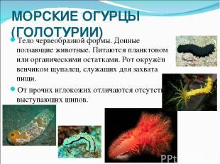 МОРСКИЕ ОГУРЦЫ (ГОЛОТУРИИ) Тело червеобразной формы. Донные ползающие животные.