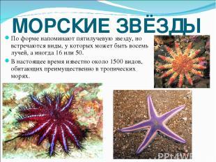МОРСКИЕ ЗВЁЗДЫ По форме напоминают пятилучевую звезду, но встречаются виды, у ко