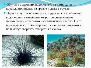 Обитают в зарослях водорослей, на камнях, на коралловых рифах, на грунте и даже