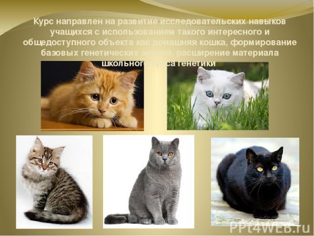 Курс направлен на развитие исследовательских навыков учащихся с использованием такого интересного и общедоступного объекта как домашняя кошка, формирование базовых генетических знаний, расширение материала школьного курса генетики