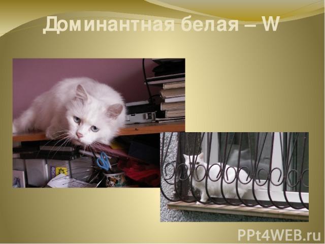 Доминантная белая – W