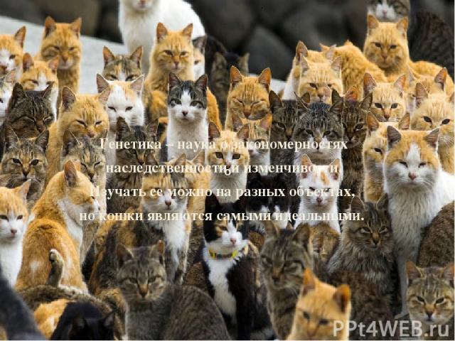 о Генетика – наука о закономерностях наследственности и изменчивости. Изучать ее можно на разных объектах, но кошки являются самыми идеальными.