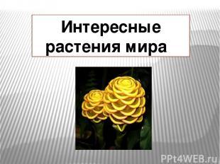 Интересные растения мира