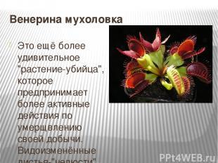 """Венерина мухоловка Это ещё более удивительное """"растение-убийца"""", которое предпри"""