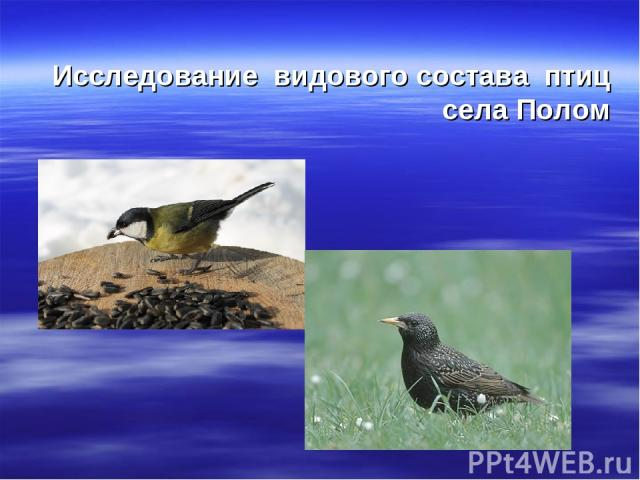 Исследование видового состава птиц села Полом