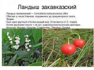 Ландыш закавказский Ландыш закавказский — Convallaria transcaucasica Utkin Обита