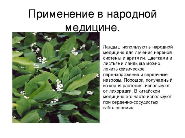 Применение в народной медицине. Ландыш используют в народной медицине для лечения нервной системы и аритмии. Цветками и листьями ландыша можно лечить физическое перенапряжение и сердечные неврозы. Порошок, получаемый из корня растения, используют от…