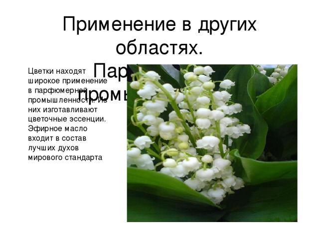 Применение в других областях. Парфюмерная промышленность. Цветки находят широкое применение в парфюмерной промышленности. Из них изготавливают цветочные эссенции. Эфирное масло входит в состав лучших духов мирового стандарта