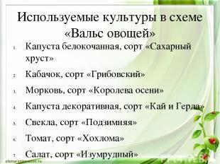Используемые культуры в схеме «Вальс овощей» Капуста белокочанная, сорт «Сахарны