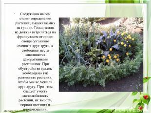 Следующим шагом станет определение растений, высаживаемых на грядки. Голая земля