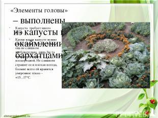 «Элементы головы» – выполнены из капусты в окаймлении бархатцами Капуста требует