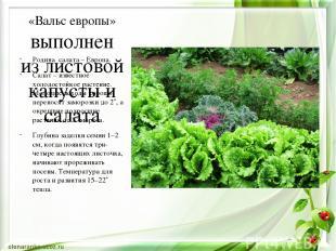 «Вальс европы» выполнен из листовой капусты и салата Родина салата – Европа. Сал