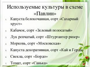 Используемые культуры в схеме «Павлин» Капуста белокочанная, сорт «Сахарный хрус