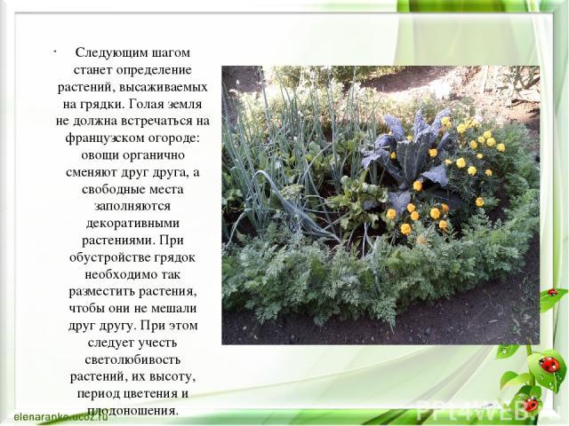 Следующим шагом станет определение растений, высаживаемых на грядки. Голая земля не должна встречаться на французском огороде: овощи органично сменяют друг друга, а свободные места заполняются декоративными растениями. При обустройстве грядок необхо…