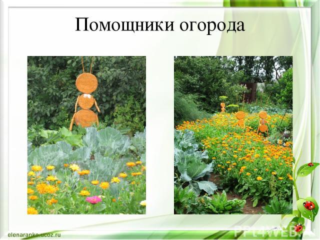 Помощники огорода