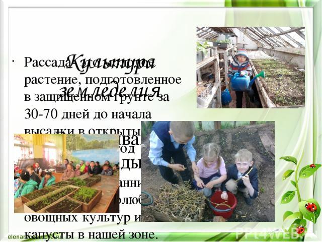 Культура земледелия Выращивание рассады Рассада- это молодое растение, подготовленное в защищенном грунте за 30-70 дней до начала высадки в открытый грунт. Этот метод незаменим при выращивании ранних овощей и теплолюбивых овощных культур и капусты в…